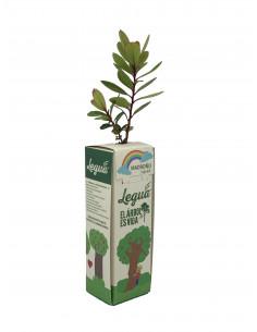 copy of STRAWBERRY TREE...