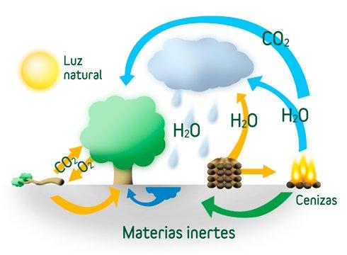 Explicación biomasa forestal